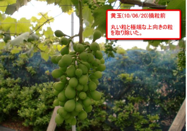 Ougyoku_01