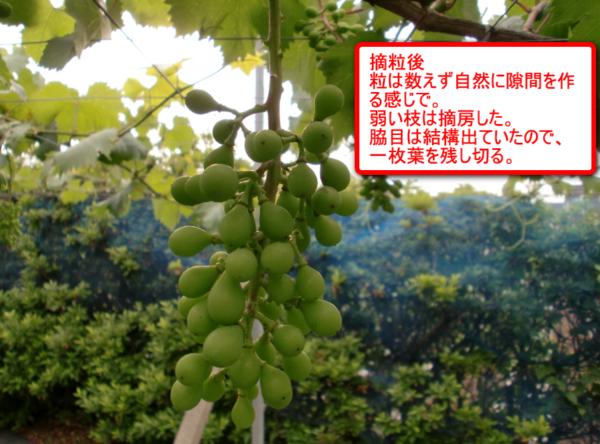 Ougyoku_02