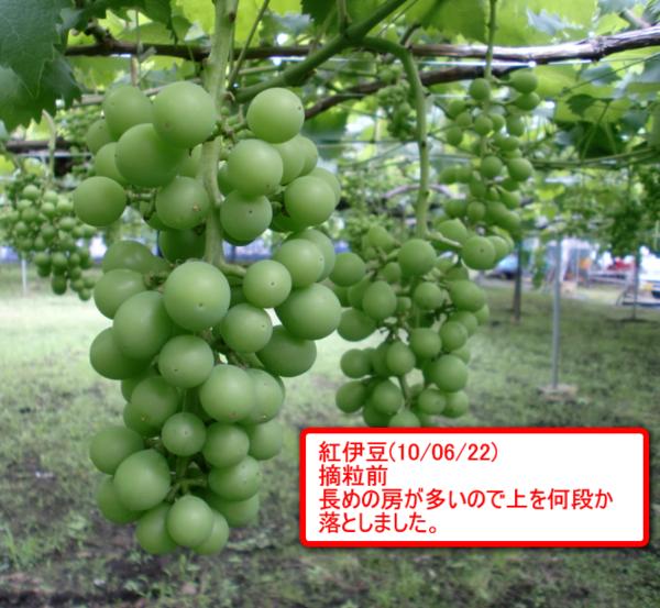 Beniizu_07_2