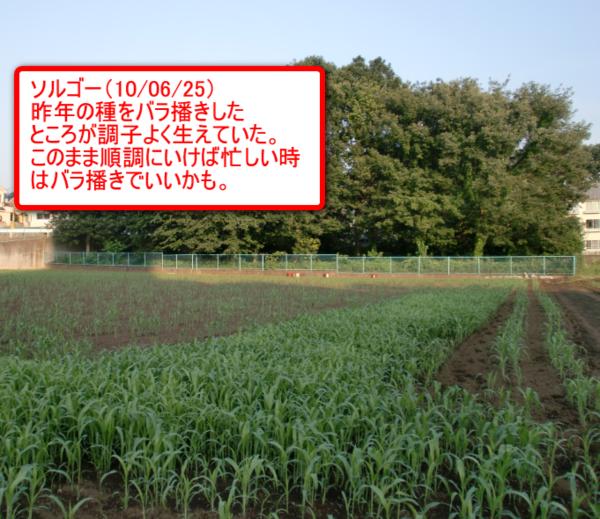 Sonota_04