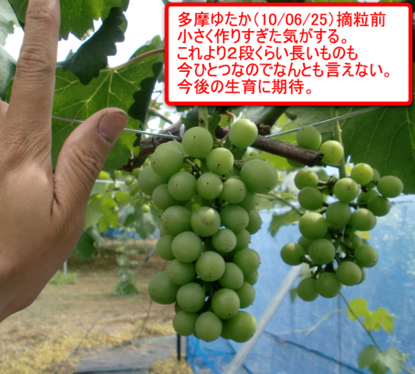 Tamayutaka_01