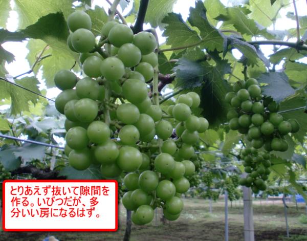 Fujiminori_13