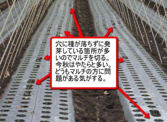 20101118_1952_2